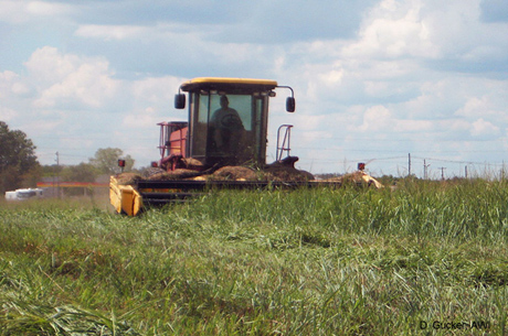 Local farmer mowing switchgrass, a biomass crop that can be fed as hay.